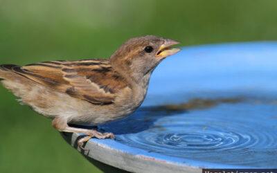 Trockener Sommer betrifft auch unsere Tiere